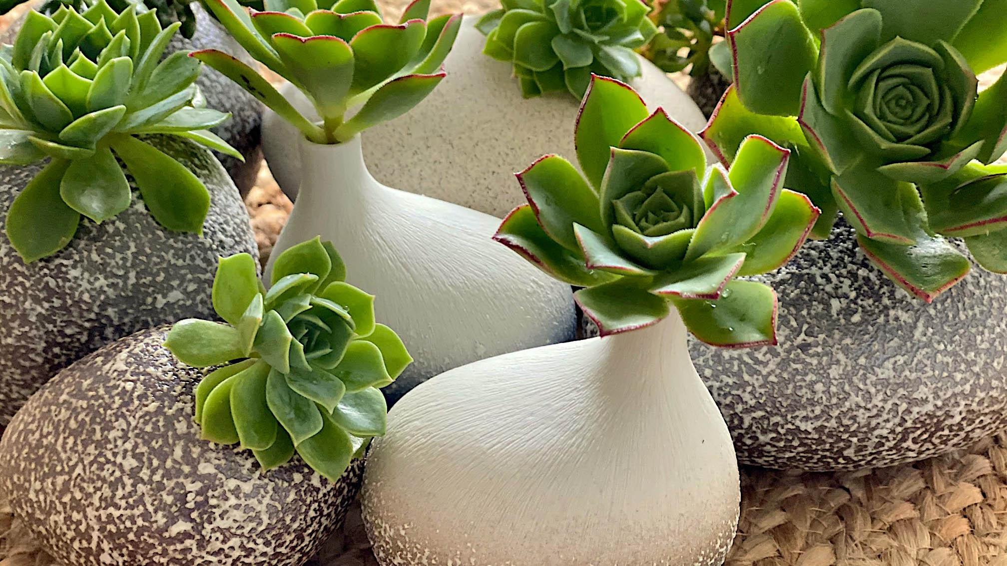 Seaspray pebbles with succulents